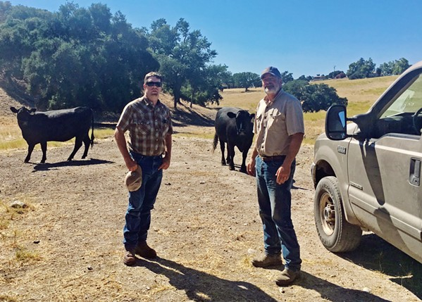 MOVIN' AND GROOVIN' Will Woolley and Alton Emery of Templeton Hills Beef are always looking for new land, making sure their cattle have fresh grasslands to graze on. Woolley explained that the Templeton area has long dry seasons, which make grazing challenging. - PHOTO BY BETH GIUFFRE