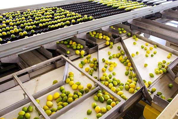 AUTOMATED Bee Sweet Citrus unveiled on June 12 its new SLO County-based citrus wash line and processing facility, which can wash and organize 70 bins carrying 800 pounds of fruit each in an hour. - PHOTO BY KASEY BUBNASH
