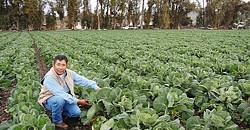 MARTINON'S GREENS SLO Veg farmer Javier Martinon of Martinon Farms is one of more than 40 farms that partner with SLO Veg. - PHOTOS COURTESY OF SLO VEG