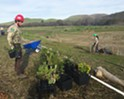 Conservation groups complete Chorro Creek restoration project, benefiting the Morro Bay watershed