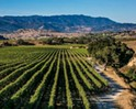 Lompoc City Council preemptively rejects proposed wine BID