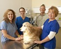 Pet healing
