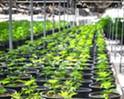 Former Clearwater Nursery denied cannabis permit amid alleged violations