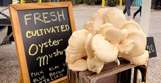 Morro Bay Mushrooms grows several varieties of oyster mushrooms that are out of this world