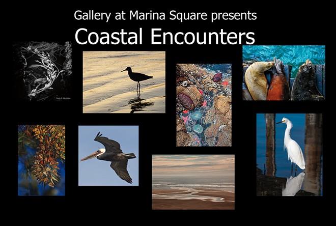 coastalencounters01-copy.jpg