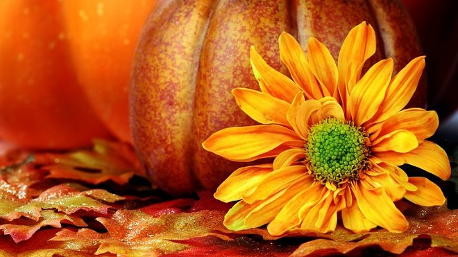 free-hd-pumpkin-wallpaper-768x432.jpg