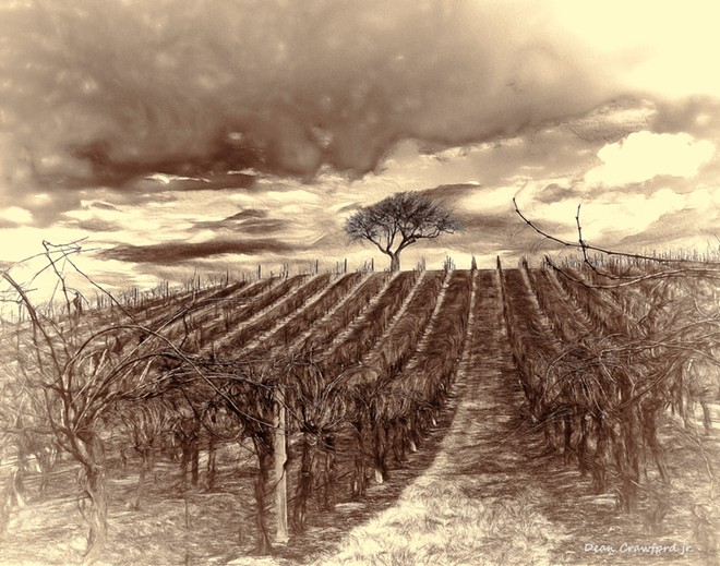 vineyard_and_oak--newest_11_x_14_paint-browns_2-email.jpg