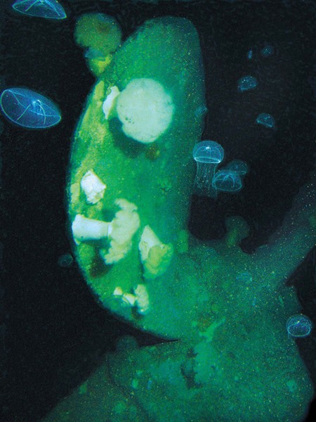 JELLY & BLADE :  Jellyfish examine the ship's propeller blade. - PHOTO BY ROBERT SCHWEMMER, NOAA