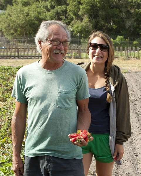 EDIBLE EARTH JEWELS :  Ralph Johnson and his apprentice farmer Racquel Oropeza have a small plot that produces a generous crop of strawberries for the various local farmers markets. - PHOTOS BY STEVE E. MILLER