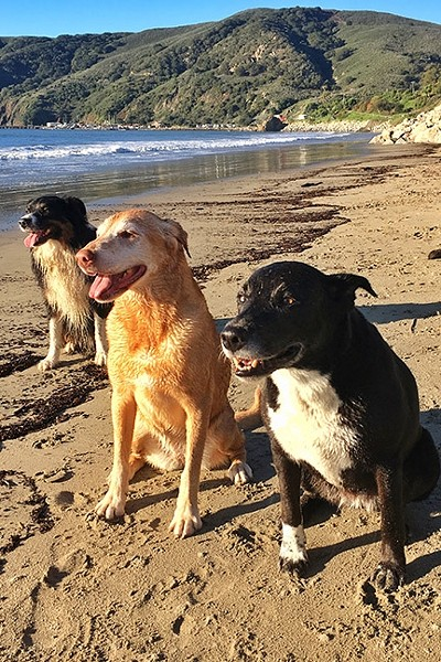 THREE AMIGOS:  Every weekend my three dogs—(left to right) Brody, Bella, and Moonleaf—hit Olde Port Beach for exercise and socialization. - PHOTO BY GLEN STARKEY