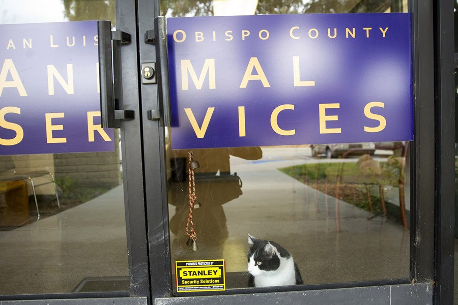 NEGOTIATE Paso and Atascadero are back in discussions with SLO County about partnering to build a new animal shelter, just one month after the two cities withdrew from a previous agreement on the shelter. - FILE PHOTO