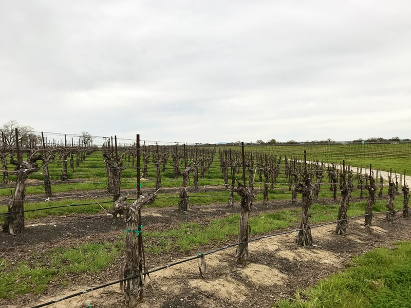 SUSTAINABLE DEBATE North County's two water districts, which represent many of Paso Robles' biggest winery owners, took issue with a draft Paso groundwater basin sustainability plan on March 20. - PHOTO BY PETER JOHNSON