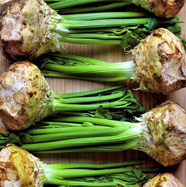 ROOTED OUT Celery root grows year round at Babé Farms in Santa Maria, where it's one of their more popular products. In 2018, the farm dedicated 34 acres to the root vegetable. - PHOTOS COURTESY OF BABÉ FARMS
