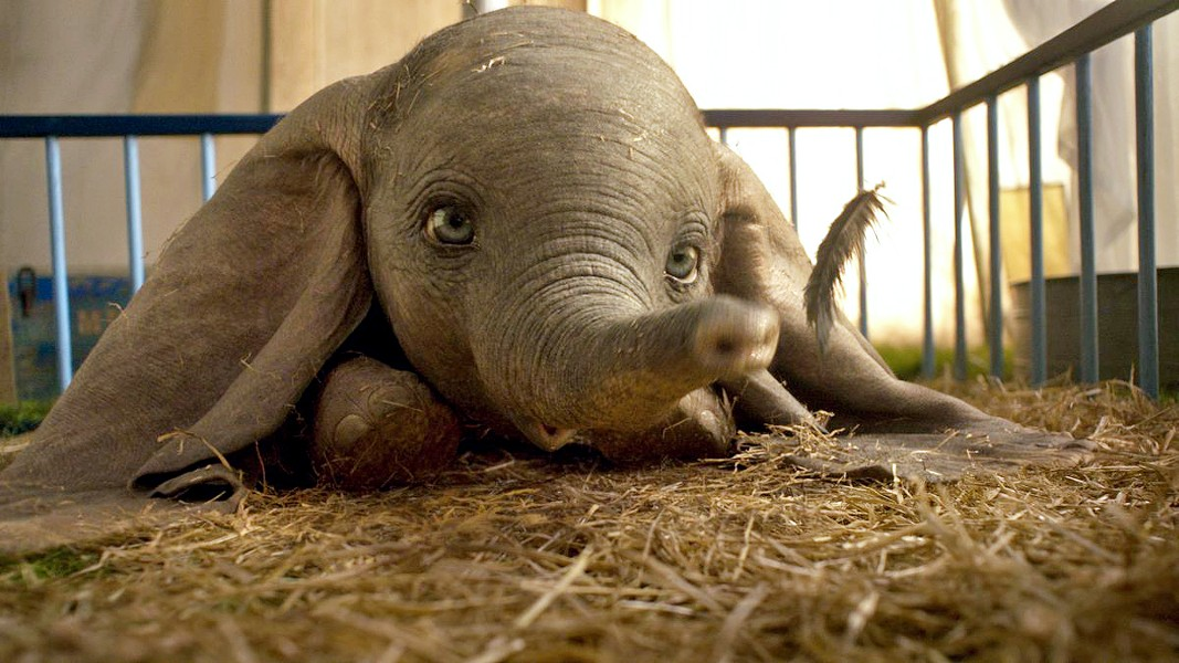 BABY MINE The trend of live-action remakes of Disney animated films continues with director Tim Burton's Dumbo. - PHOTOS COURTESY OF WALT DISNEY STUDIOS