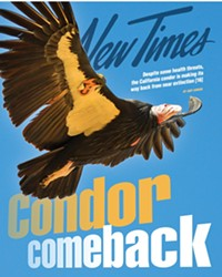 CALIFORNIA BIOLOGISTS FIGHT TO HELP CONDORS STAY ALIVE--AND THRIVE