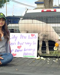 ANIMAL FARM Greener Pastures Sanctuary rescues farm animals and shares them with children and other groups for education and therapy.