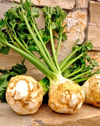 A FACE ONLY A MOTHER COULD LOVE It may not be pretty, but celery root is a versatile and hearty vegetable with similarities to the turnip. It can be used in a variety of dishes, including soups and salads.