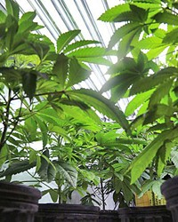 TOO CLOSE? A proposed cannabis grow's proximity to a school in Edna Valley is drawing opposition from neighbors.