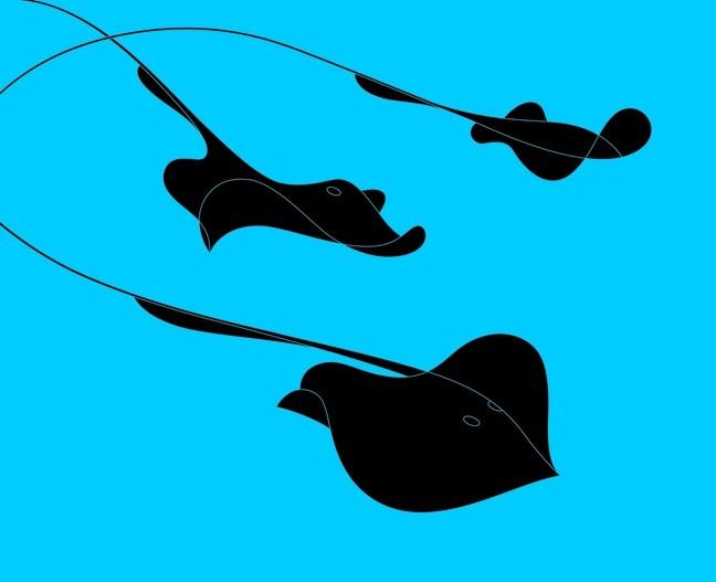 STINGRAYS :  A stingray seems to consist of a single elegant flourish, in this minimal graphic illustration by Mignon Khargie.