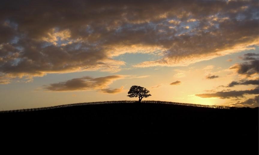 LONE OAK SUNSET: - PHOTO BY TONY HERTZ