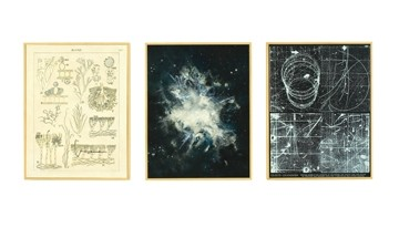 "NONPAREIL TRIPTYCH :  ""They are all things we can't see with the naked eye,"" said Sutcliffe of Making the invisible, visible. ""One is neutrons in a cloud chamber... the other is microscopic parts of plants ... again, representations of things, or different ways we describe something visually."" - IMAGES COURTESY OF LESLIE SUTCLIFFE"