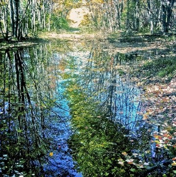 "QUITE AN IMPRESSION:  Taken via camera phone, Gary Dwyer's ""Impressionist Bog"" invokes the light and color of Monet's lily pad paintings. - PHOTO BY GARY DWYER"