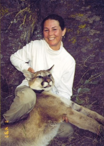 YOU CAN'T HIDE YOUR LION EYES :  Scientists are finding out about the secret life of mountain lions, using radio tracking collars like this one fitted on a tranquilized big cat by SLO teacher Suzanne Nichols. - PHOTO COURTESY OF SUZANNE NICHOLS