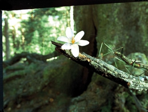 REAL-LIFE STUDIES :  Building stick bugs that transform into fairies required special effects designers to study the flight of hummingbirds and dragonflies, as well as the movement of a dancer. - PHOTO COURTESY OF PICTUREHOUSE ENTERTAINMENT