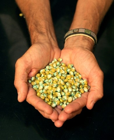 NO Q FOR YOU :  While much of the this year's election headlines focused on national issues, the debate surrounding Measure Q —  which would have banned county residents from growing genetically engineered crops — sparked fierce debate around the county.  The measure was defeated by a 59 to 41 percent margin.