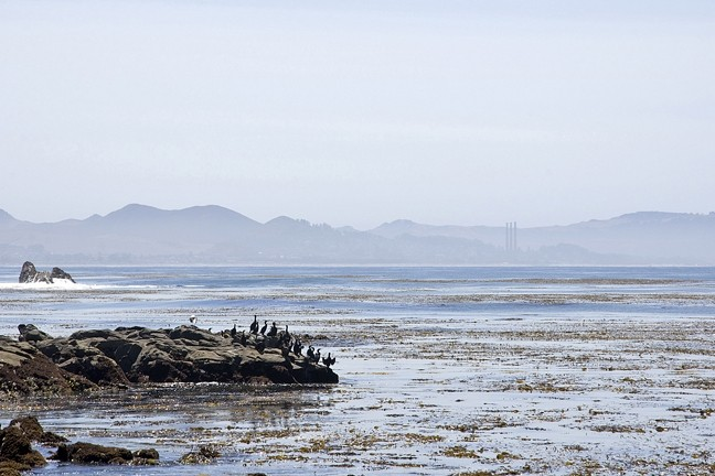 HAZY LOOKOUT:  Morro Bay appears ghostlike from the Estero Bluffs, enshrouded in fog trying desperately to burn off. - PHOTO BY CAMILLIA LANHAM