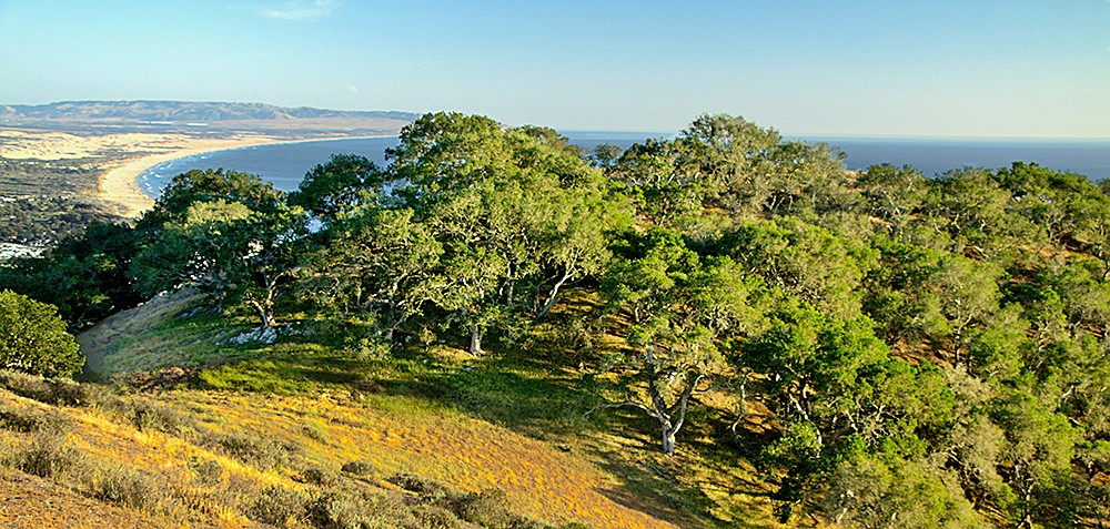 GRAND OPENING After five years of work, the Pismo Preserve opens to the public on Jan. 25. It offers 11 miles of multi-use trails with sweeping views of the Pacific Ocean coastline. - PHOTO COURTESY OF THE LAND CONSERVANCY OF SLO COUNTY