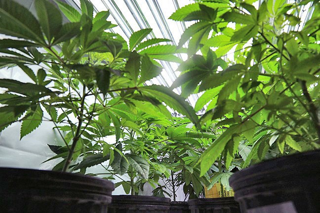 TOO CLOSE? A proposed cannabis grow's proximity to a school in Edna Valley is drawing opposition from neighbors. - FILE PHOTO