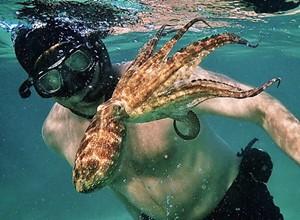<b><i>My Octopus Teacher</i></b>