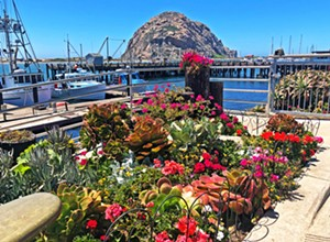 Morro Bay in Bloom beautifies the Embarcadero, one flower at a time