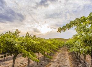 Turning wine into water: Vintner David Parrish works to restore Adelaida Creek
