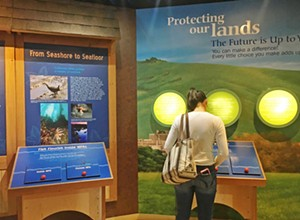 Morro Bay Museum of Natural History is a fun, quick summertime adventure