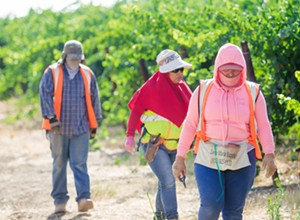 All hands on deck: SLO County addresses a farm labor and housing shortage