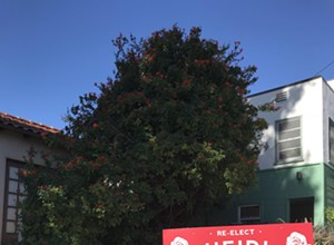 Lawn sign debate wages in SLO city