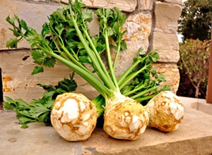 Kick it root down: Celery root is a unique root vegetable to try during late spring