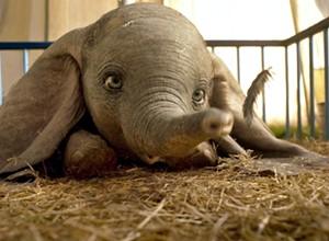'Dumbo' flies low