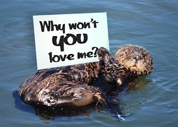 Morro Bay snubs sea otters