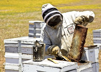 Stay gold: Whether drizzled in sauces or eaten raw, local honey brightens Central Coast kitchens