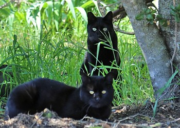 Meow or never: Animal services organizations confront cat overpopulation in SLO's North County