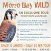 Morro Bay WILD @ Pacific Wildlife Care