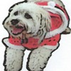 Santa's Doggie Parade @ Avila Beach Promenade