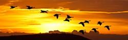 Sunrise birds in flight - Uploaded by Roseann Millward