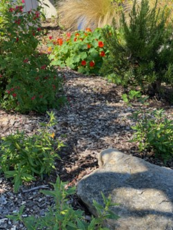 Waterwise Garden at the Los Osos Library - Uploaded by Wendy McKeown