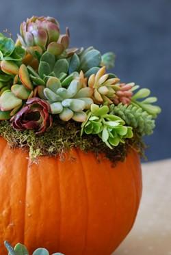 Create a succulent pumpkin centerpiece - Uploaded by Joan Martin Fee