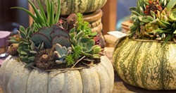 f565b8c5_pumpkin-succulent.jpg
