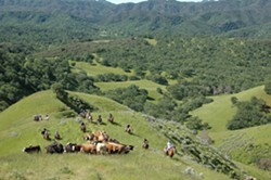 PHOTO COURTESY OF THE CALIFORNIA RANGELAND TRUST - OPENLY PROTECTED Keeping its rich history intact, the Avenales Ranch celebrates its official conservation.